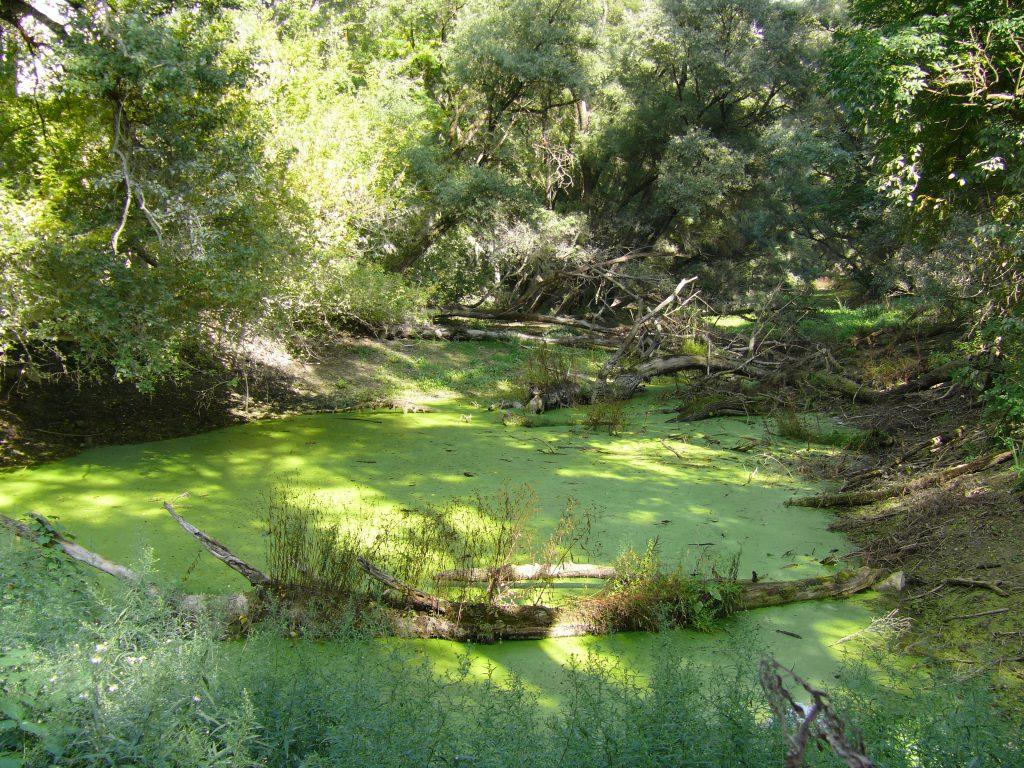 Kisoroszi, a Kőgeszteri- sziget mellékágban