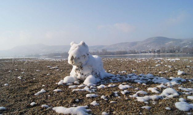 Hókutya őrzi a hóbárányokat a Kisoroszi Szigetcsúcson