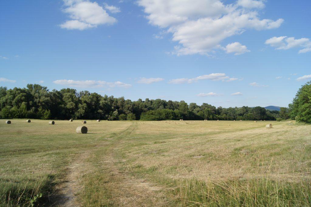 Kisoroszi legelő