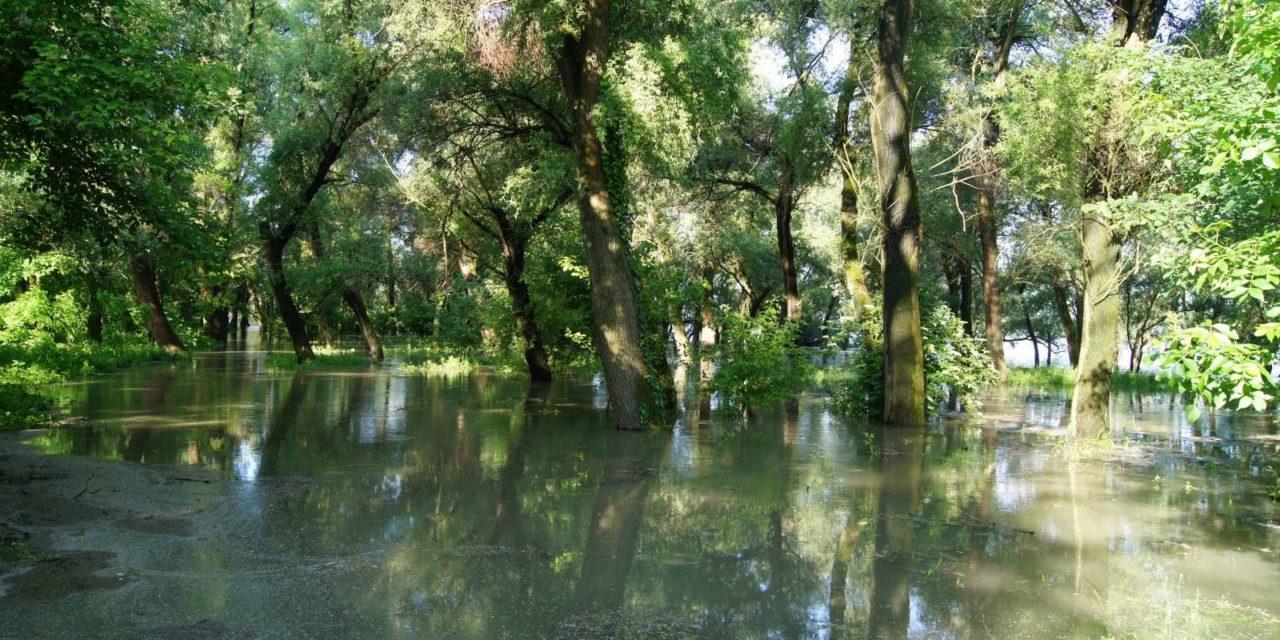 Tetőzik a Duna árhulláma Kisoroszi Szigetcsúcson