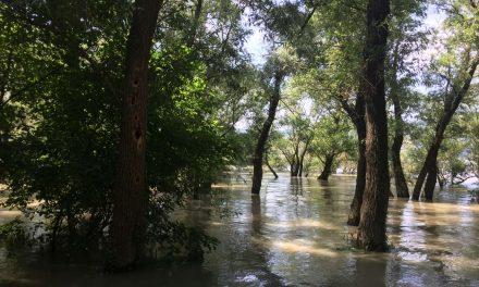 Tetőzött a Duna árhulláma Kisoroszi Szigetcsúcson